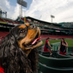 Dog Day at Fenway Park