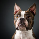 Mini Portrait Day at Common Dog in Everett September 10th